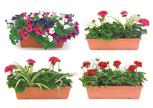 balconnière fleurie