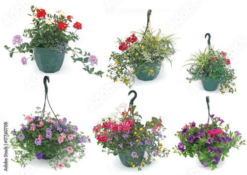 suspension florale photo libre de droits sur la banque d. Black Bedroom Furniture Sets. Home Design Ideas