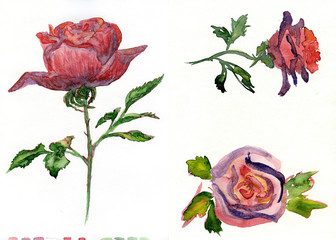 rose_watercolor