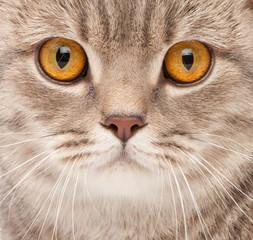 Cat close-up portrait