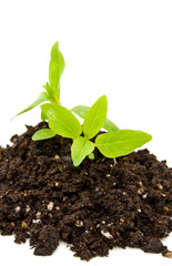 Save our planet - new life with tender plant