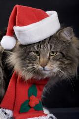 świąteczny kot 1