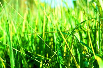 bright grass close-up