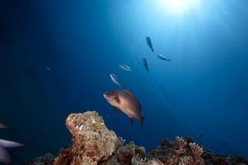 ocean, sun and fish