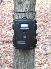 Deer hunting trail camera