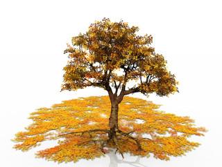 arbre et feuilles