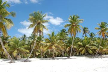 Insel Saona - karibisches Paradies