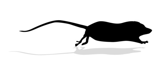 silhouette mouse on white background