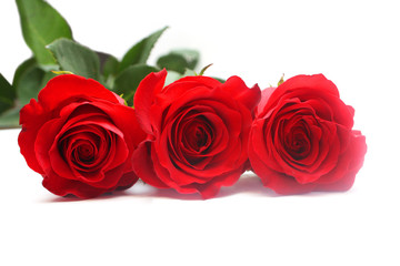 Isolated red roses