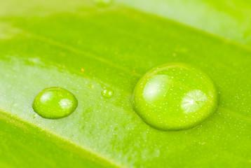 fresh dews on green leaf