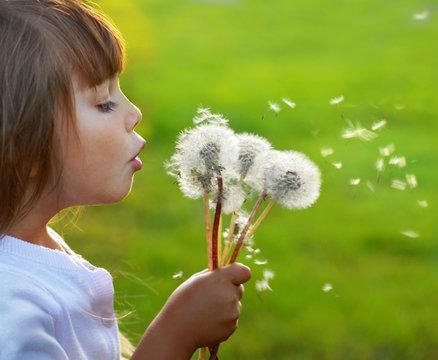 Little girl blowing dandelions on the meadow