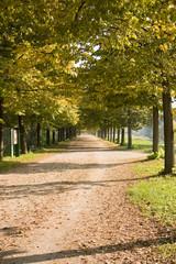 Viale albertato in autunno