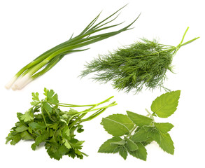 Collection of fresh greens on the white background