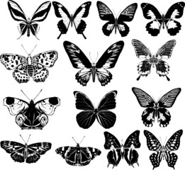 fourteen black and white butterflies