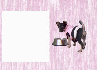Chihuahua Puppy Pink 2