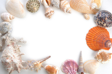 frame made of sea shells