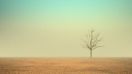 A lonely dead tree in a desert