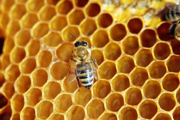 Foto op Canvas Bee beehive