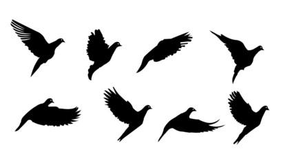 FLYING BIRD VECTOR SILHOUETTES ILLUSTRATION