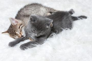Little Kittens Sleeping