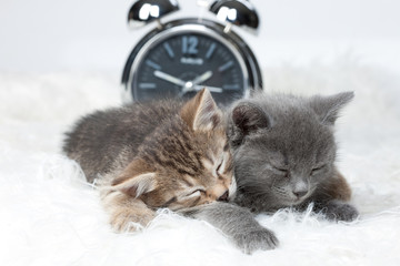 Little Kittens And Alarm Clock