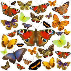 Colored butterflies isolated on white