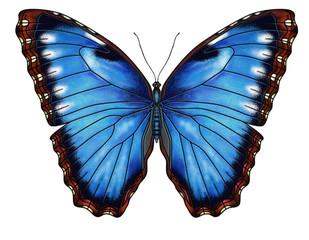 Blue Morho
