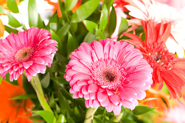 Red gerbera flower agaisnt green blurred background