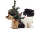 cat spay and neuter clinic fort collins