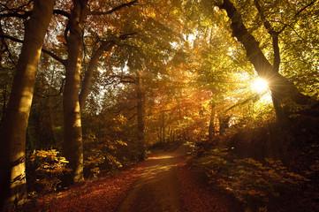 Herbstliche Stimmung Sonnenlicht im Wald