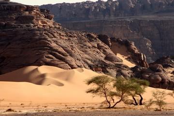 Desert scenes13