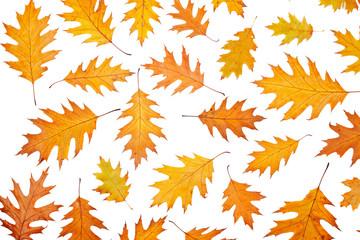 Assortment of leaves