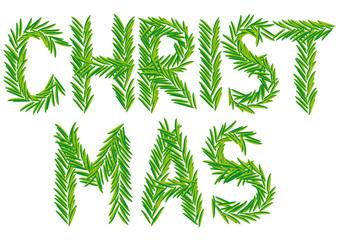 Christmas fir branch, xmas card, vector
