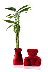 Cute red stuffed bear toy and a bamboo plant