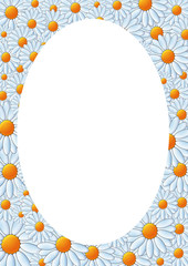 oval frame made of daisy flowers in bloom