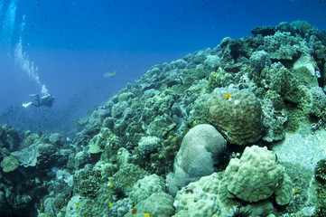 coral reef with diver in the background