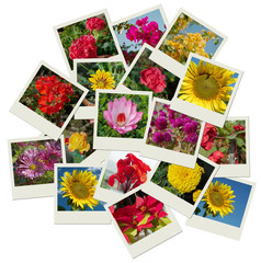 Flowers photo shots collage background