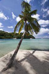Palm tree, St. Lucia