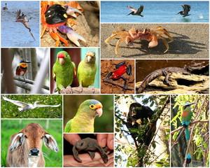 Los animales de Nicaragua