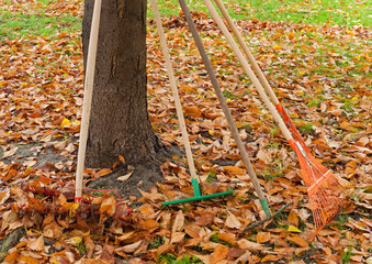 Rakes to be used for gathering the leaves