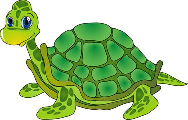 cartoon tortoise