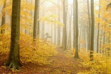 Keuken foto achterwand Bos in mist Path leading through the autumnal forest in dense fog