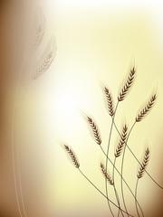 Floral background Grain ears