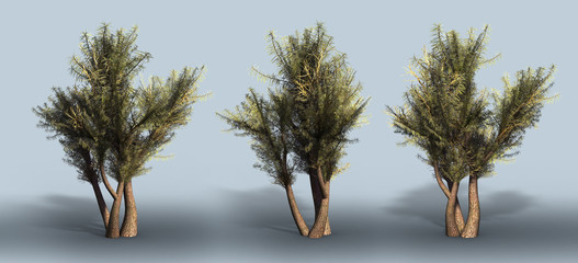 Trees on a grey background. 3D art-illustration.