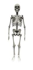 Squelette 9