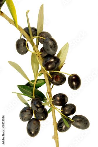 Ramo d 39 ulivo immagini e fotografie royalty free su for Acquisto piante ulivo