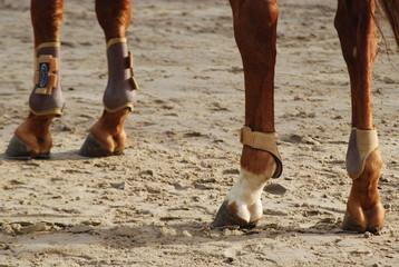 Membres de cheval.