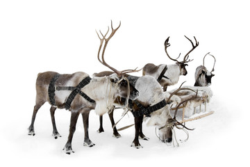 Wall Murals Pole Four reindeers