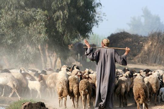 shepherd in africa