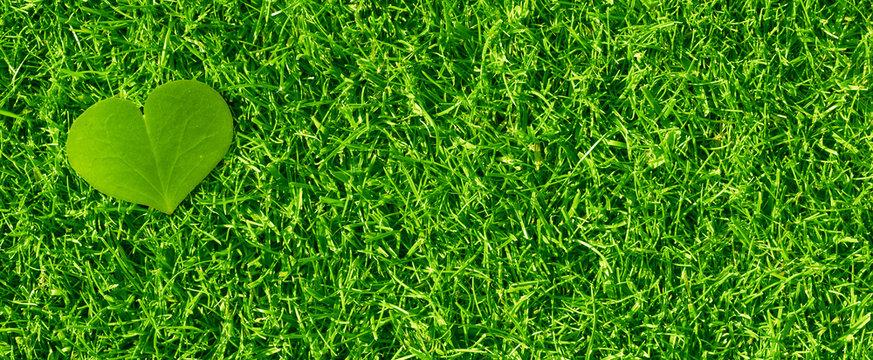 coeur écologique - fond de gazon vert - environnement